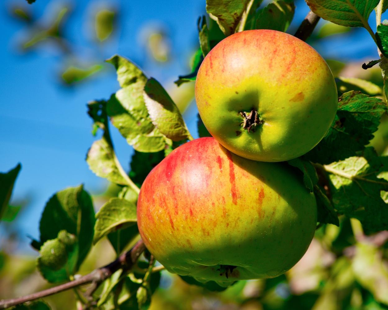 Orchard_ND80883